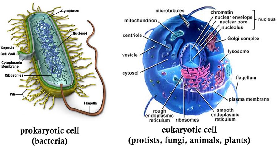 prokaryote_and_eukaryote