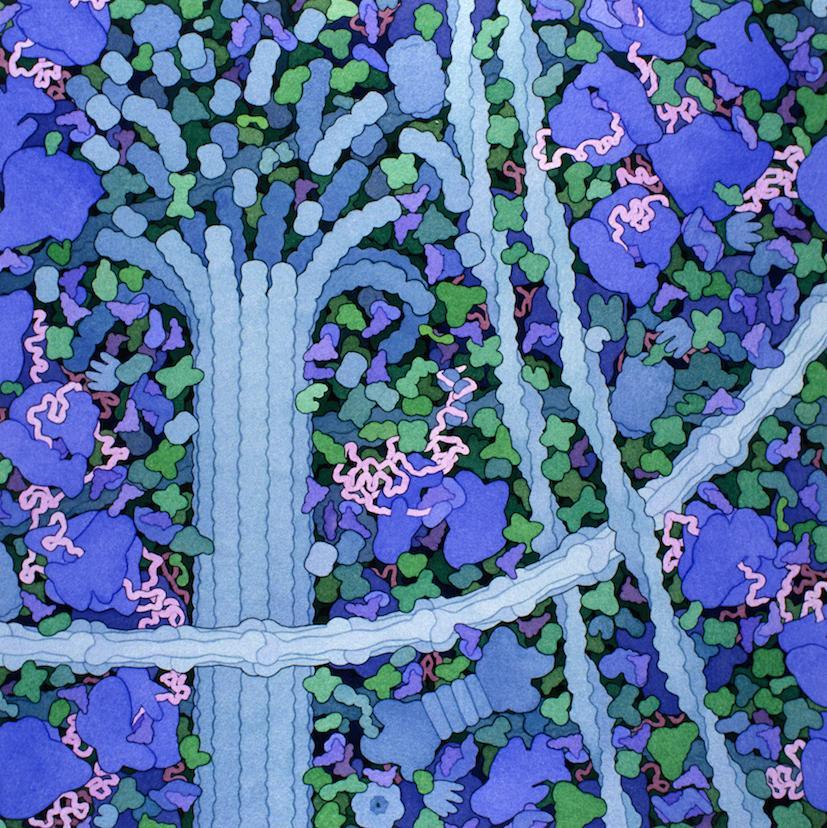 biosites-cytoplasm